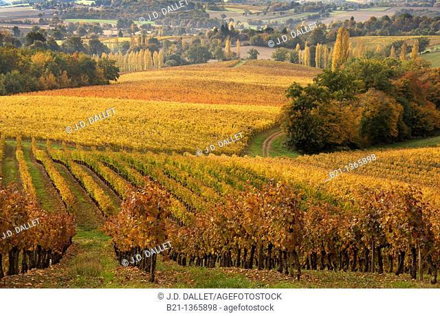 France-Midi Pyrenées-Gers- landscape of wine fields at Samazan