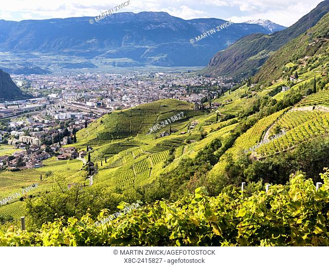 Viniculture around Bozen (Bolzano) the capital of South Tyrol during autumn. Europe, Central Europe, South Tyrol, Italy