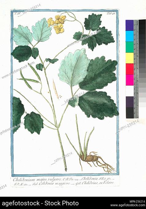 Chelidonium majus, vulgare = Chelidonia = Celidonia maggiore = Chelidoine, ou Eclaire. [Greater Celandine, Wartweed]. Bonelli, Giorgio (b