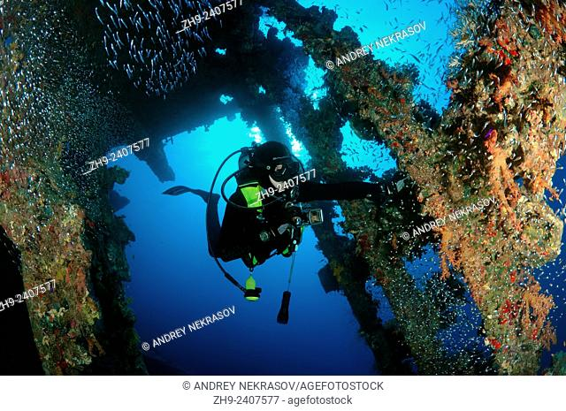 Diver looking at wreckship Carnatik. Red Sea, Sharm El Sheikh, Egypt