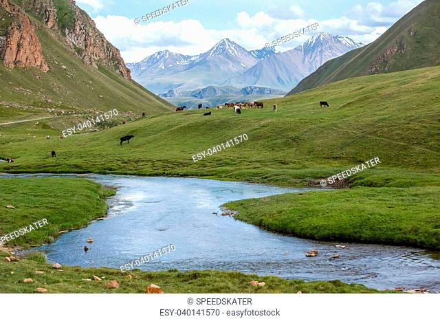 Farm animal feeding at river, Tien Shan mountains, Kyrgyzstan
