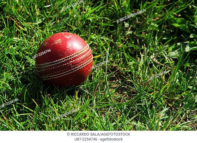 Close-up of a Cricket Ball on Grass