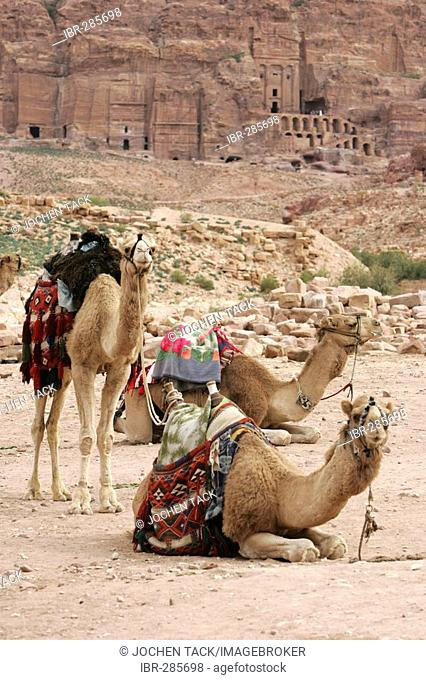 JOR, Jordan, Petra: Guides waiting for guests, who want to ride into Petra canyon. Nabatean ancient city of Petra, at the Kings Highway. |