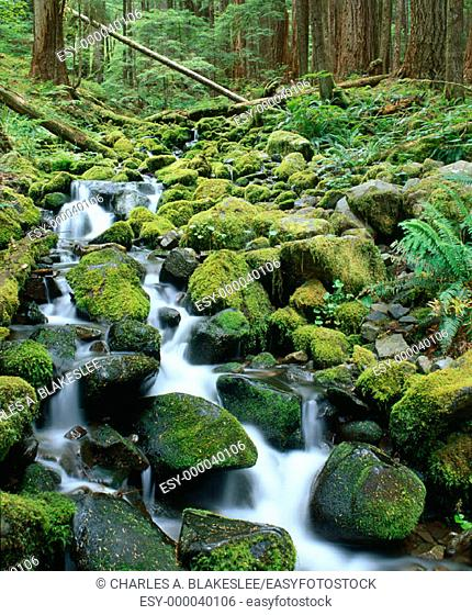Mountain cascade in Sol Duc area. Olympic National Park, Washington. USA