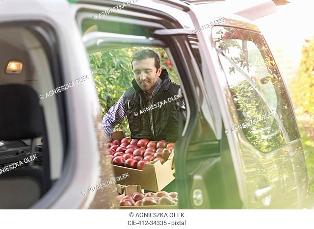 Male farmer loading red apples into car in orchard