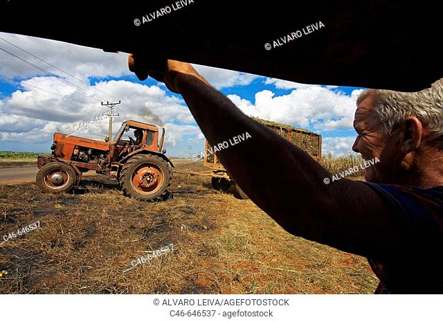 Workers during the Zafra, Sugar cane harvest, Matanzas province, Cuba