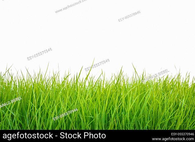 Blades of fresh grass on white background