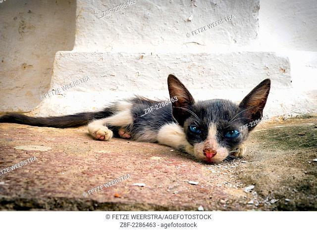 Cat on Cemetery