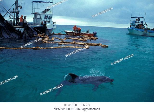 TURSIOPS TRUNCATUSBOTTLENOSE DOLPHINUSA - FLORIDANEAR FISHING--BOAT