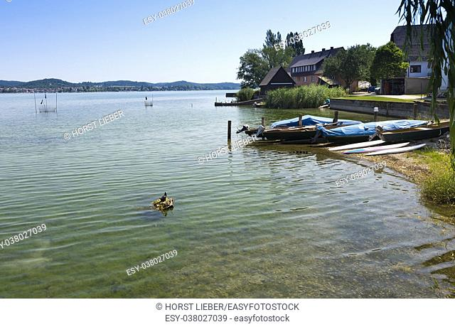 The waterside near Niederzell on the island Reichenau - Island of Reichenau, Lake Constance, Baden-Wuerttemberg, Germany, Europe