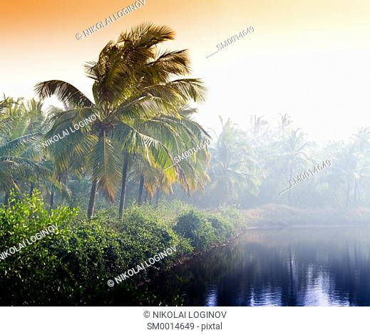 Horizontal vivid indian sunset palm on lake beach background backdrop