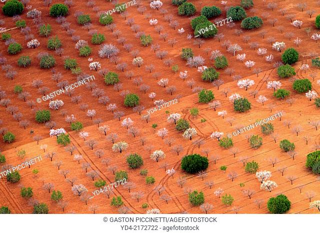 Different kind of trees in the farm land from the air, Mallorca lands, Balearic Island, Spain