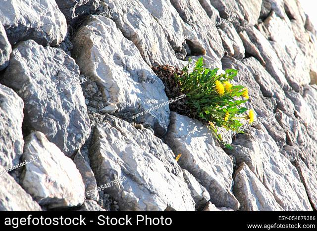 Green plants growing in the crevices of stone walls
