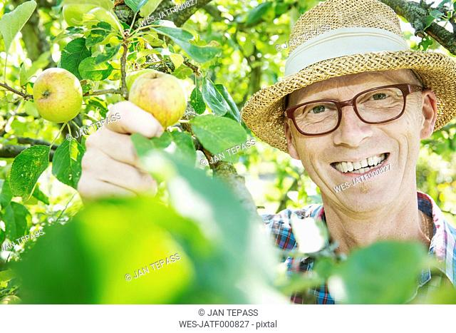 Portrait of happy allotment gardener harvesting apples