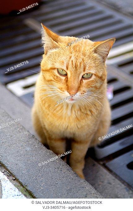 street cat, location sant feliu guixols, girona, catalonia, spain,
