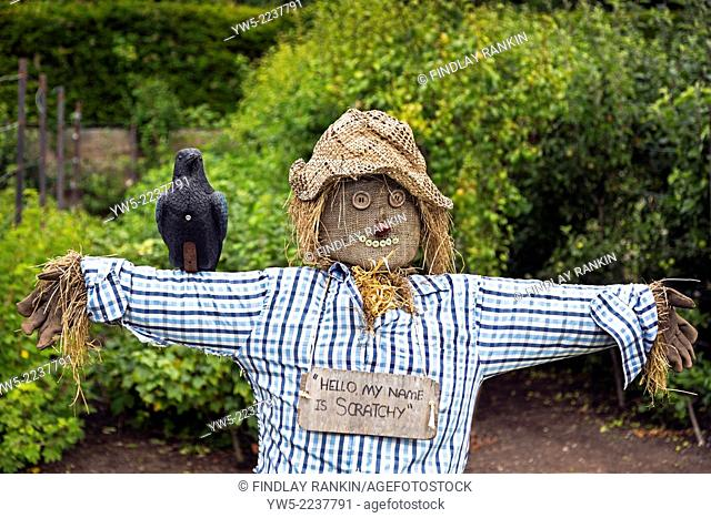Home made scarecrow in a vegetable garden, Glasgow, Scotland, Uk