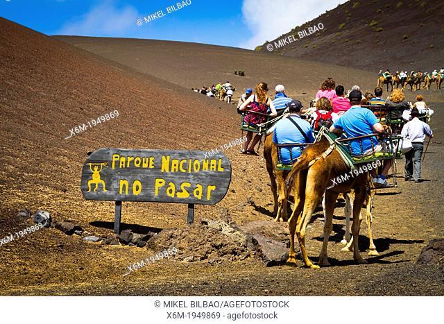 Camel ride. Timanfaya National Park. Lanzarote, Canary Islands, Atlantic Ocean, Spain