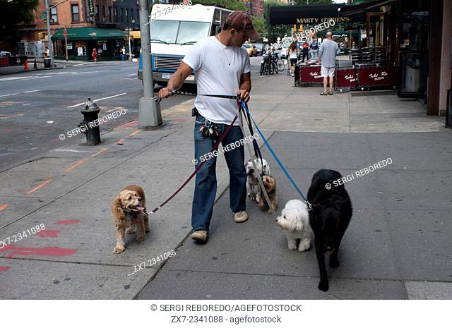 Dog walkers walking dogs in New York City. Manhattan Paws main interest is to provide the very best care for NYC dogs. Our knowledgeable and dedicated walkers...