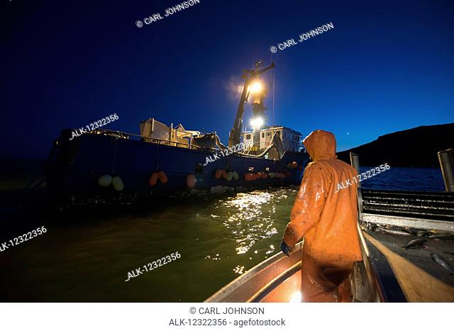 A crewman on a commercial fishing boat prepares to go alongside a tender to deliver a haul of herring in Kulukak Bay, Bristol Bay, Southwest Alaska, USA