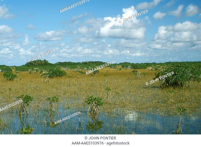 Everglades NP Scenic with Red mangroves (Rhizophora mangle), FL, Florida