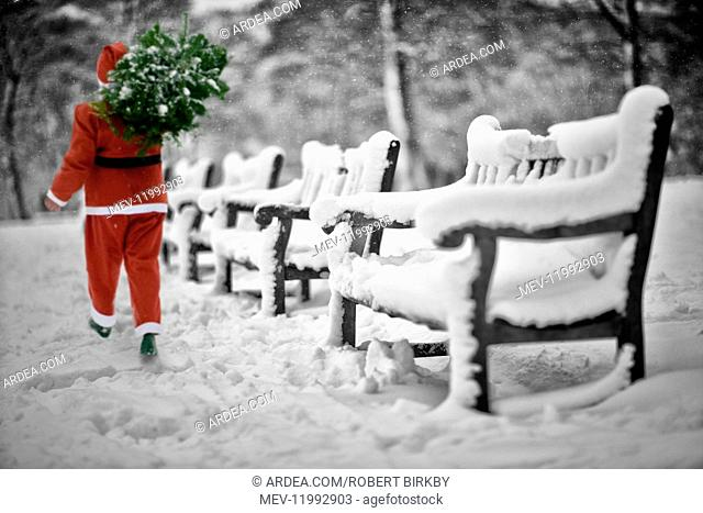 Father Christmas carrying Christmas tree walking past Benches, covered in snow, Halifax, Yorkshire, UK