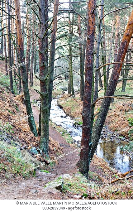 Hornillo stream in the Sierra de Guadarrama. Robledondo. Madrid. Spain. Europe
