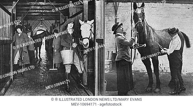 Scenes at a convalescent army remount, where forty to fifty hunting women were employed. The depot was under the District Remount Officer for Berkshire
