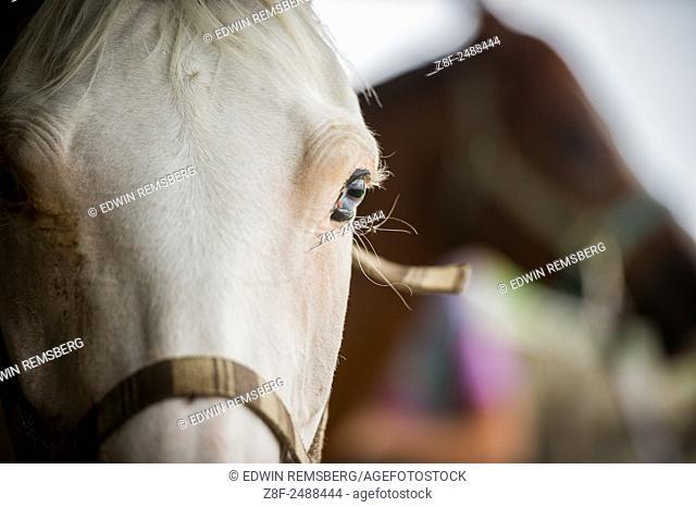 Close-up of horse eye near Hurlock, Maryland, USA