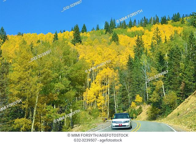 Aspens turning golden, Santa Fe National Forest, New Mexico