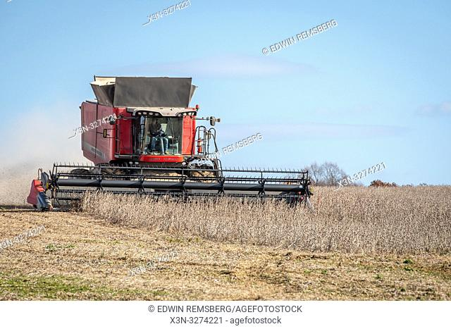 Front view of combine harvester driving through soybean (Glycine max) field, Laytonsville Maryland