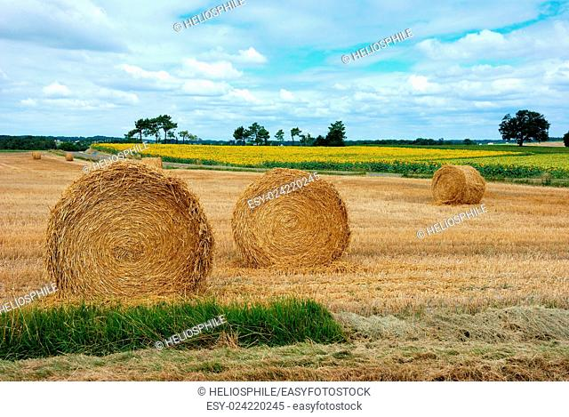 Round straw bales in harvested fields in Charentes in France