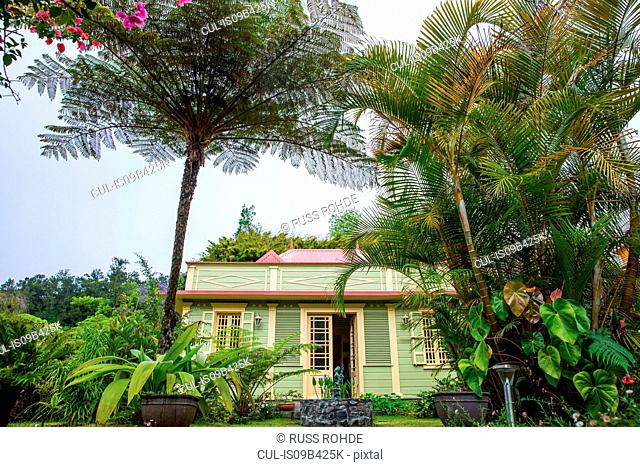 Traditional green wooden house and palm trees, Reunion Island