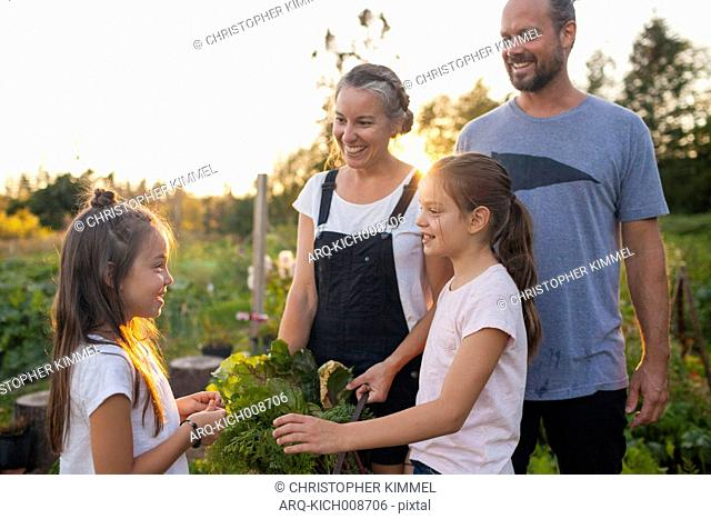 Family Smiles While Harvesting Vegetables From Their Garden In Fort Langley