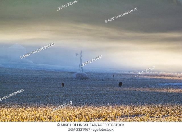 Freezing fog forms along the river flats in western Iowa November 11, 2010 on a 20F morning