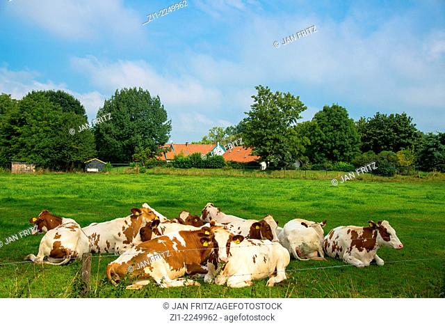 A herd of cows in the field with the farm in the background