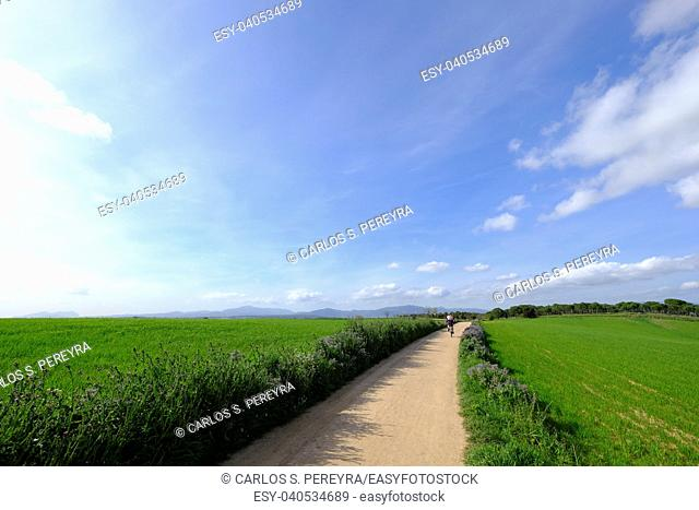 Country road in Mollet del Valles in Barcelona province in Catalonia Spain to the horizon between green fields