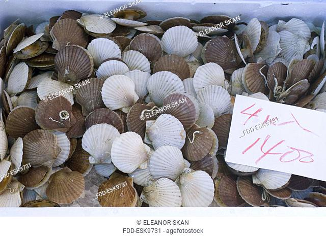 Mixed fresh scallops