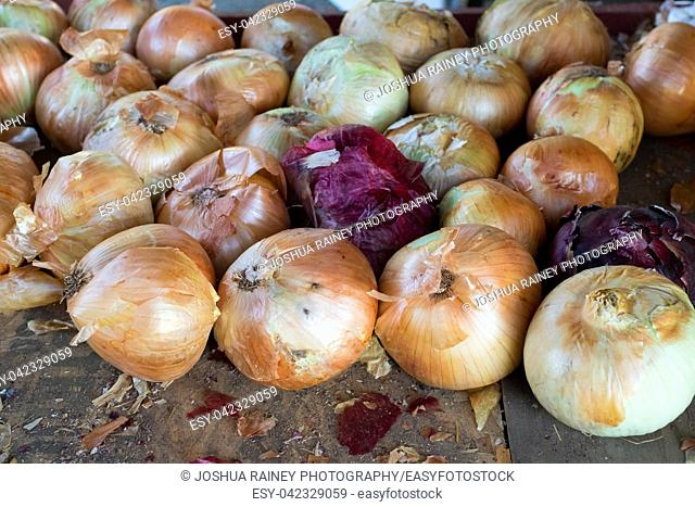 Yellow and red onions for sale at Detering Organic Farm near Eugene Oregon during the Fall