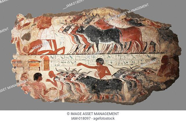 Nebamun viewing his geese and cattle. These paintings are parts of a wall showing Nebamun inspecting geese and cattle. He watches as farmers bring the animals...