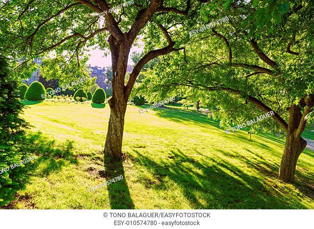 Boston Common public garden tree in Massachusetts USA
