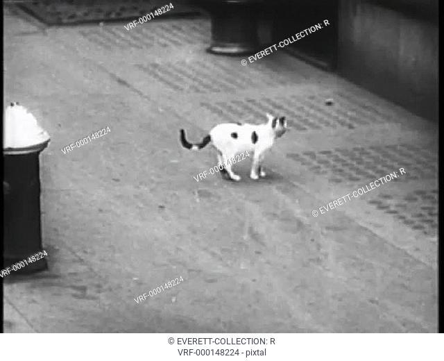 Stray cat on New York City street