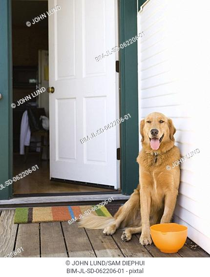 Dog on porch with bowl next to open door
