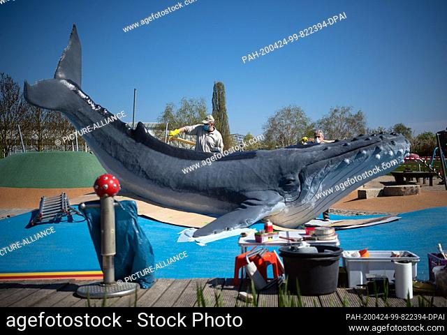 24 April 2020, Brandenburg, Oranienburg: Employees of the Formsache company from Wolfenbüttel give the humpback whale a new coat of paint on the still closed...