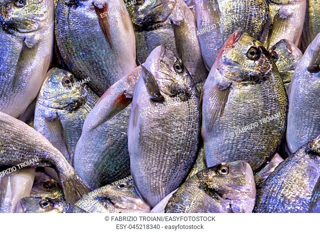 Gilt-head bream on display in the Fish market in the Kemeraltı bazaar, Izmir, Turkey