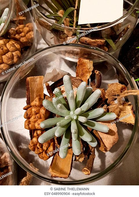 Amazing desert cactus plants with several types of cactuses in a jar