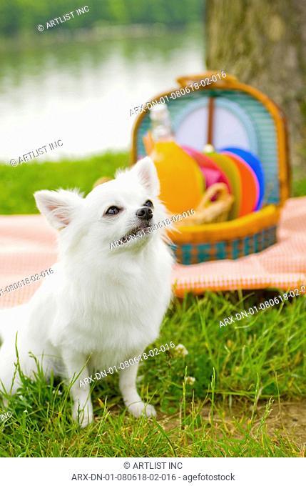 A dog on a picnic
