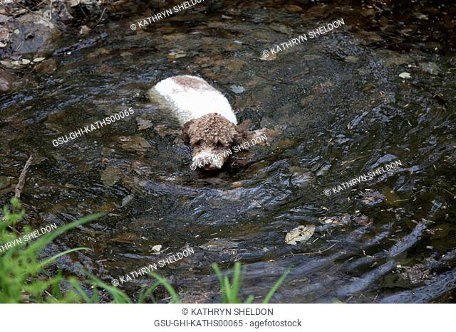 Dog Swimming in Shallow Water