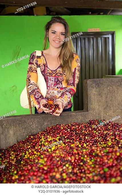 Woman showing a hand full of coffee beans collected in a pool to process them in the plantation