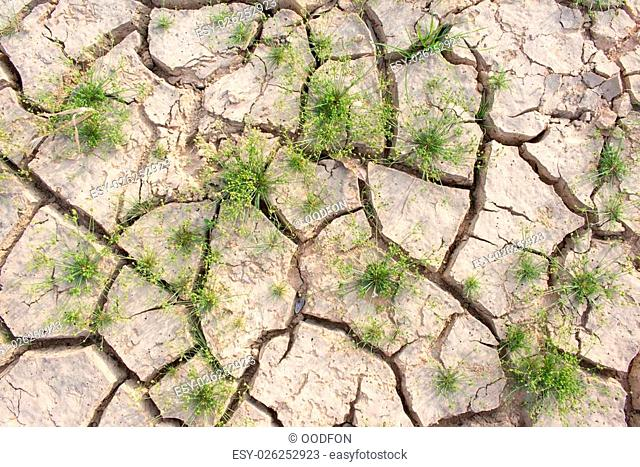 Cracked ground and survival living thing, cruel from global warm