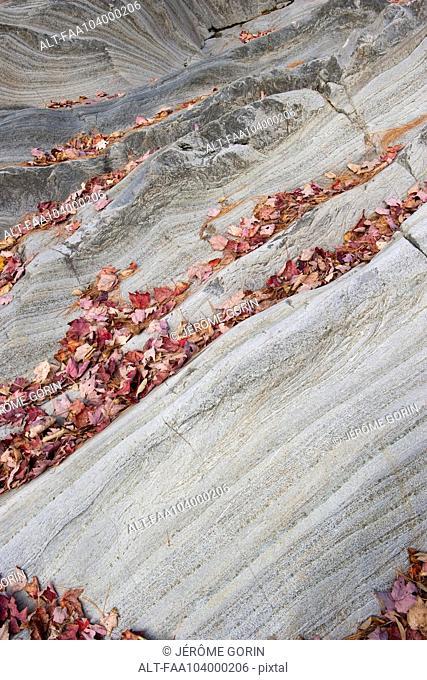 Fallen leaves on striped rock formation